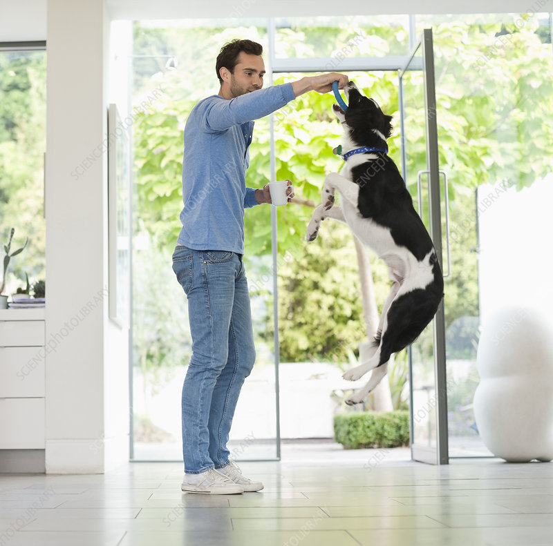 Man giving jumping dog treat in kitchen