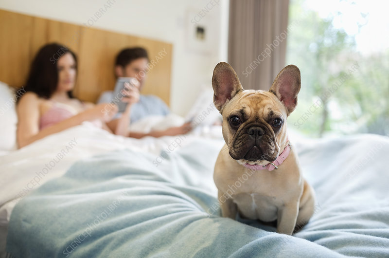 Dog sitting with couple in bed