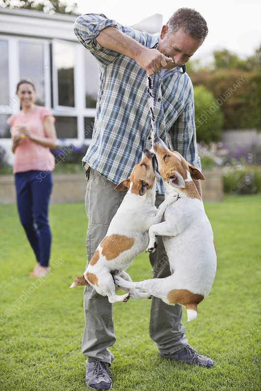 Man playing with dogs in backyard
