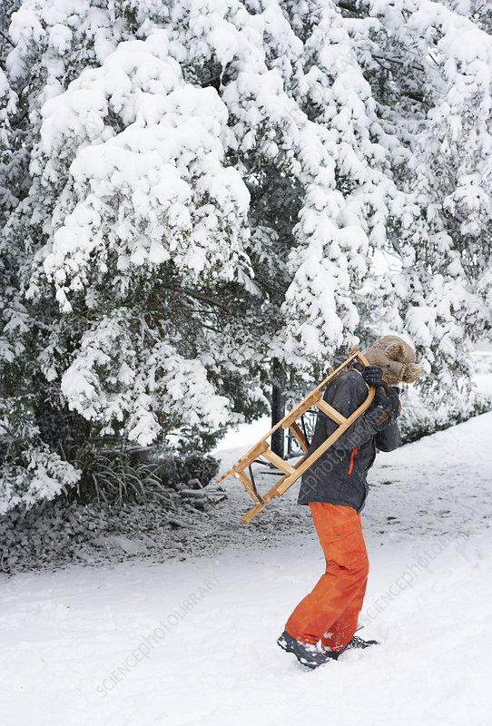 Boy carrying wooden sled in snow