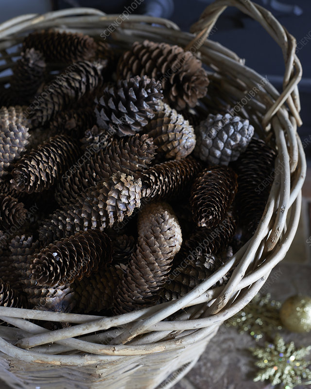 Close up of basket of pine cones