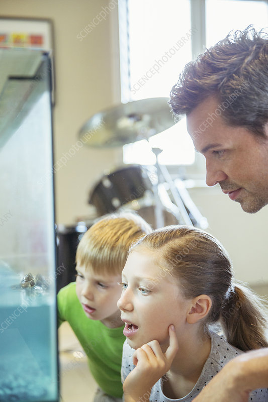 Father and children examining fish tank