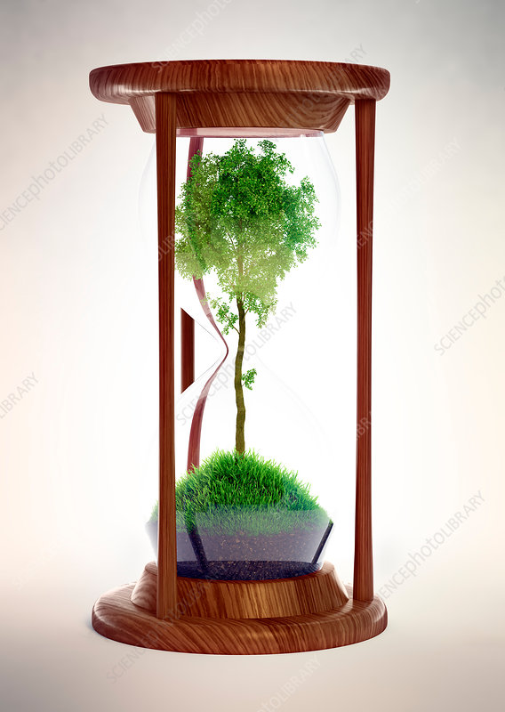 Hour glass with tree inside, illustration