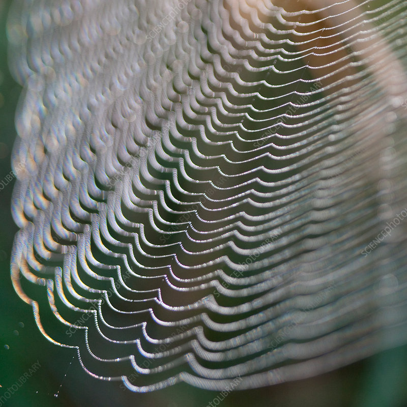 Close up of strands of spider web
