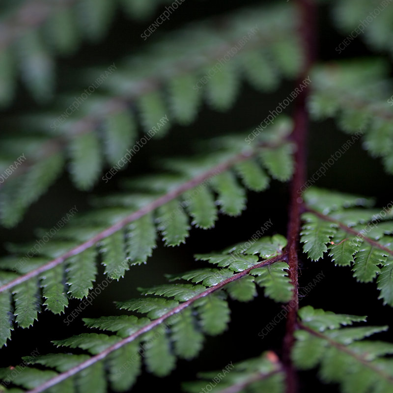 Extreme close up of green fern leaves