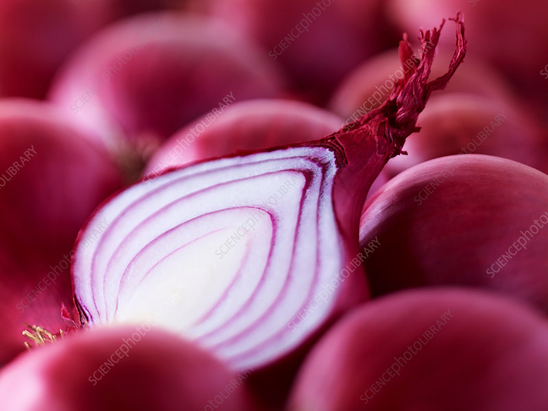 Extreme close up of raw sliced red onion
