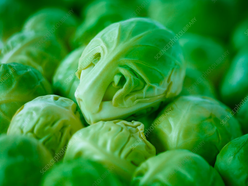 Extreme close up of raw Brussels sprouts