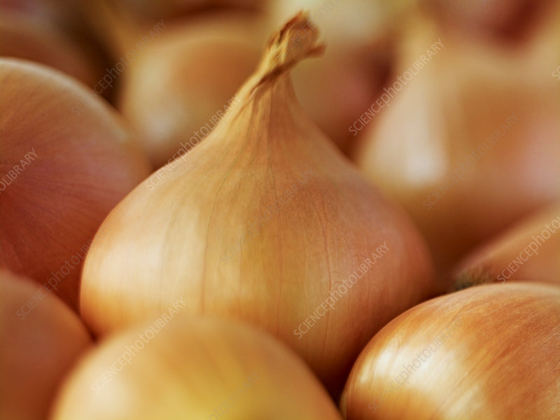 Extreme close up of whole white onions