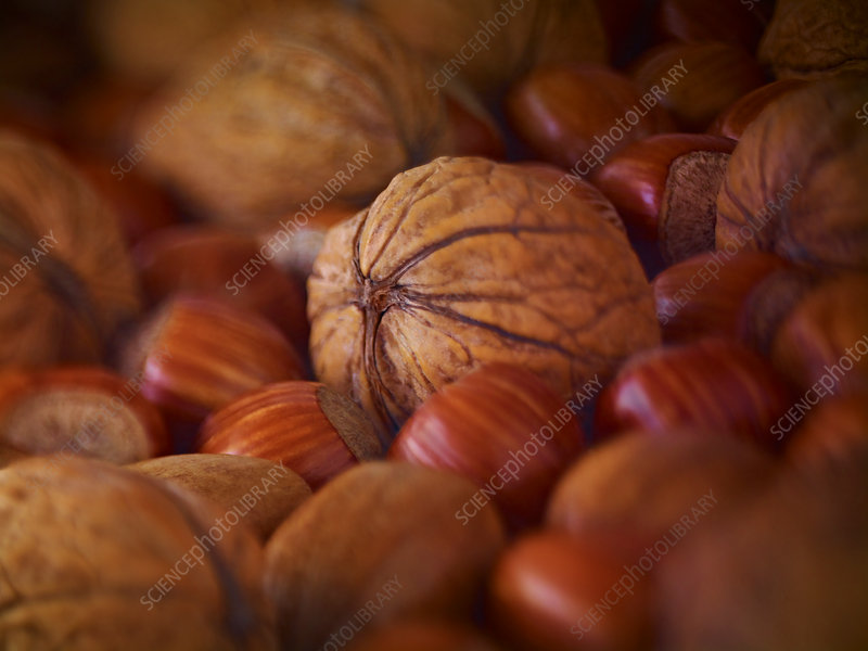 Walnuts, hazelnuts and pecans in shells