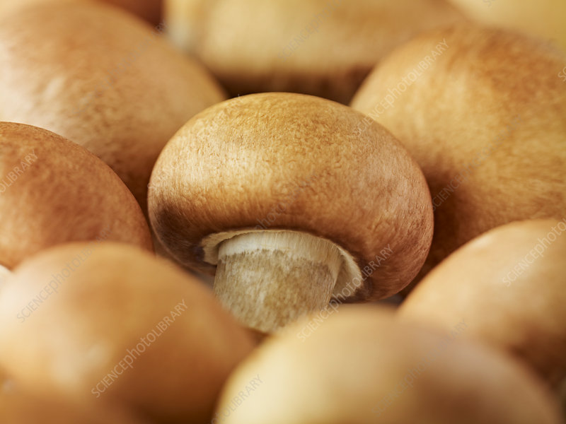 Close up of whole chestnut mushrooms