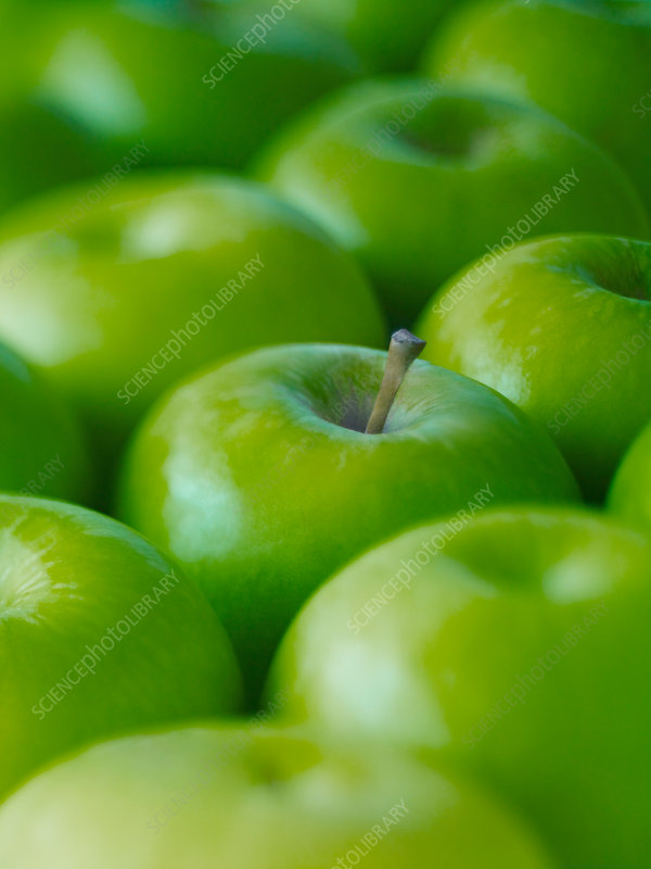 Whole green Granny Smith apples