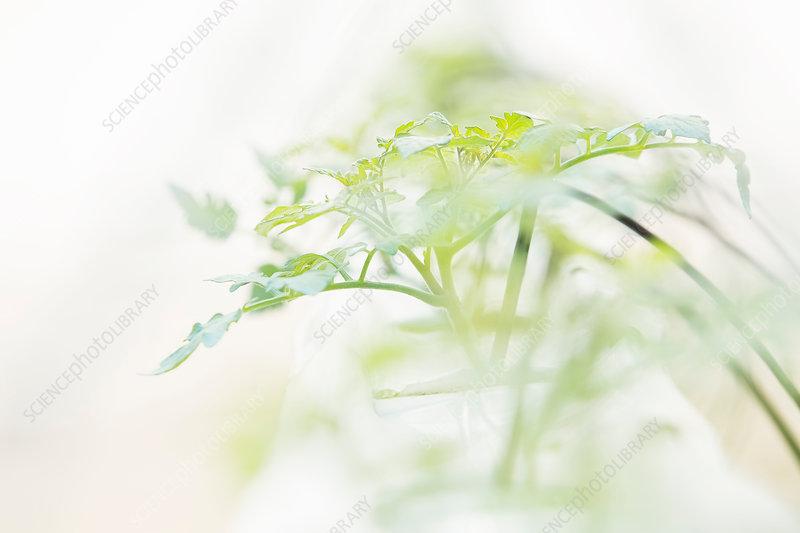 Close up of plant sapling