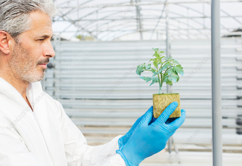 Botanist holding plant in greenhouse