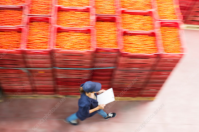 Worker walking past tomato crates