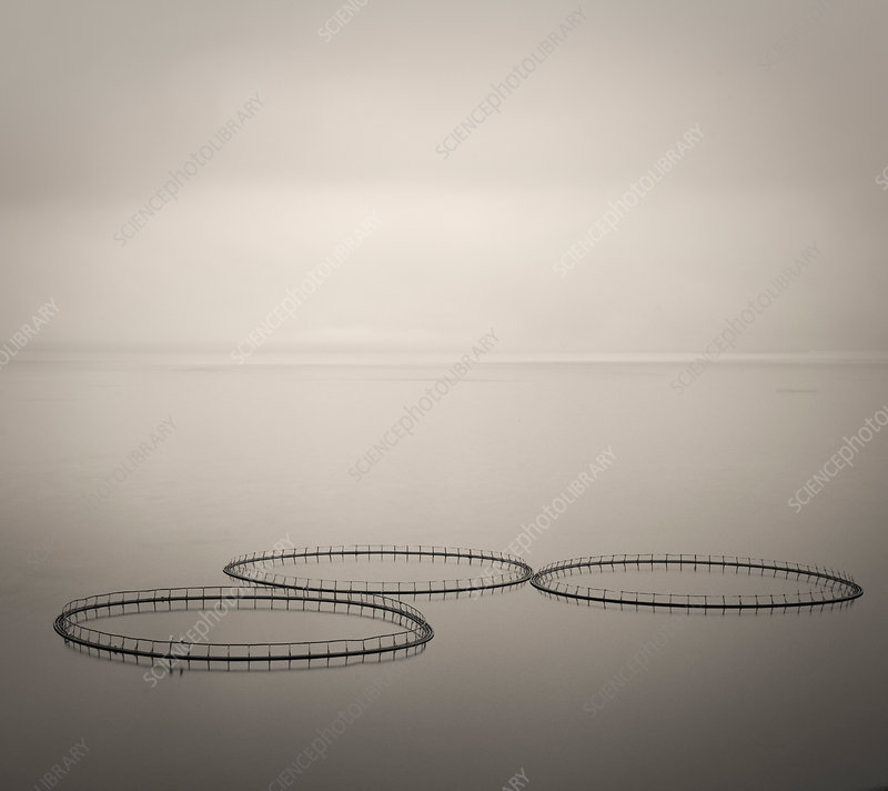 Salmon farm rings floating on calm water