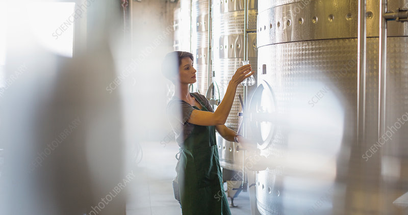 Vintner testing wine from stainless steel vat