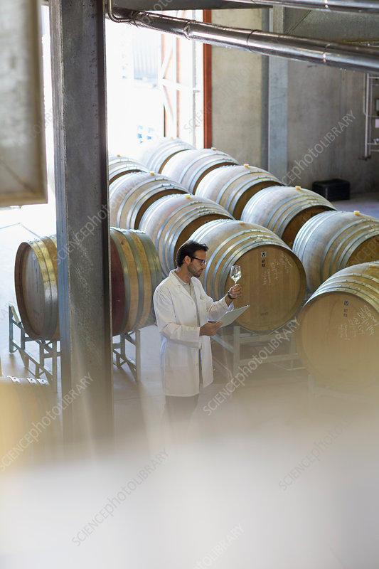 Vintner in lab coat examining white wine