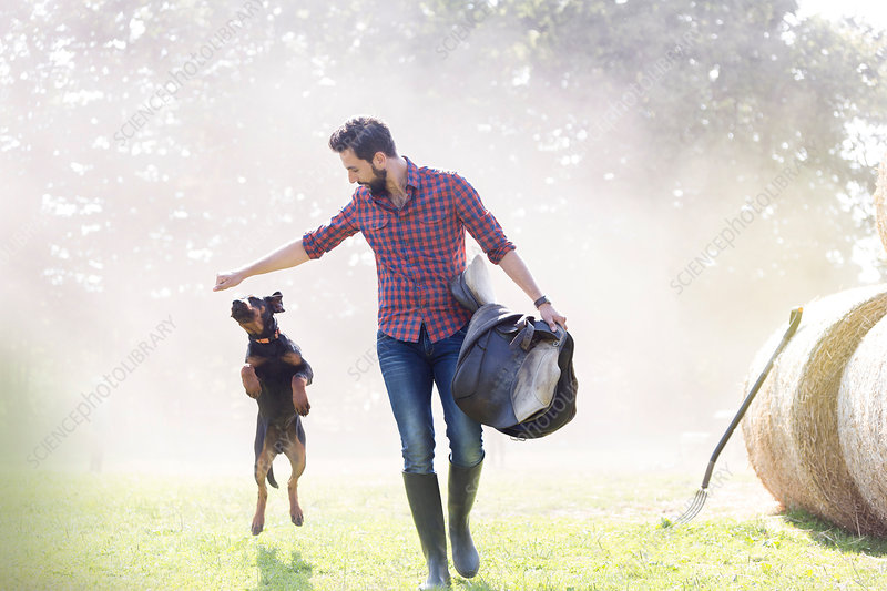 Man with saddle walking with jumping dog
