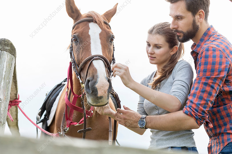 Couple adjusting bridle on horse