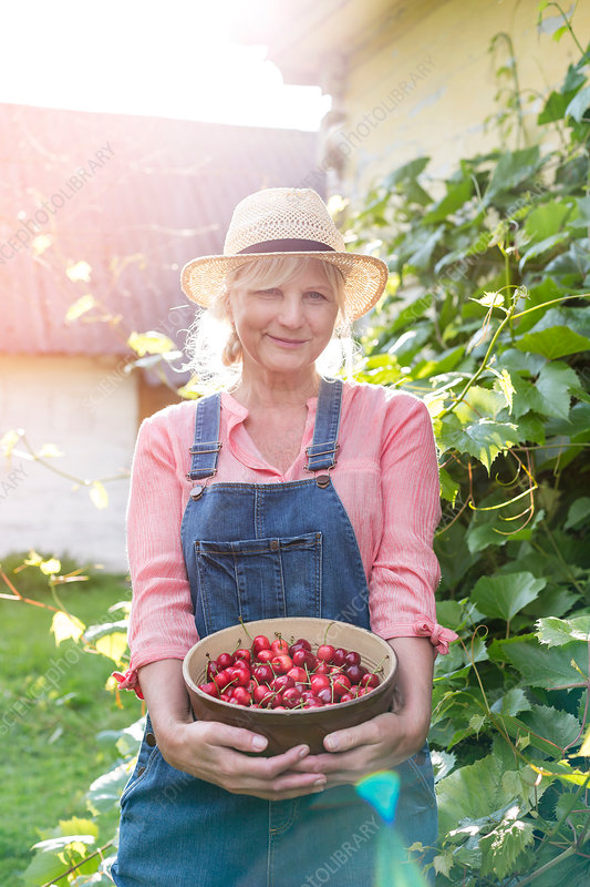 Woman holding harvested cherries