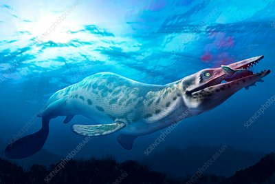 Artwork of a mosasaur
