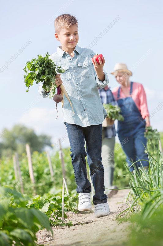 Boy carrying harvested vegetables