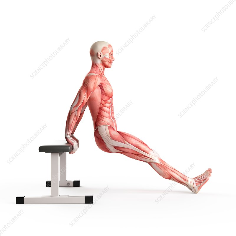 Person doing bench dip exercise