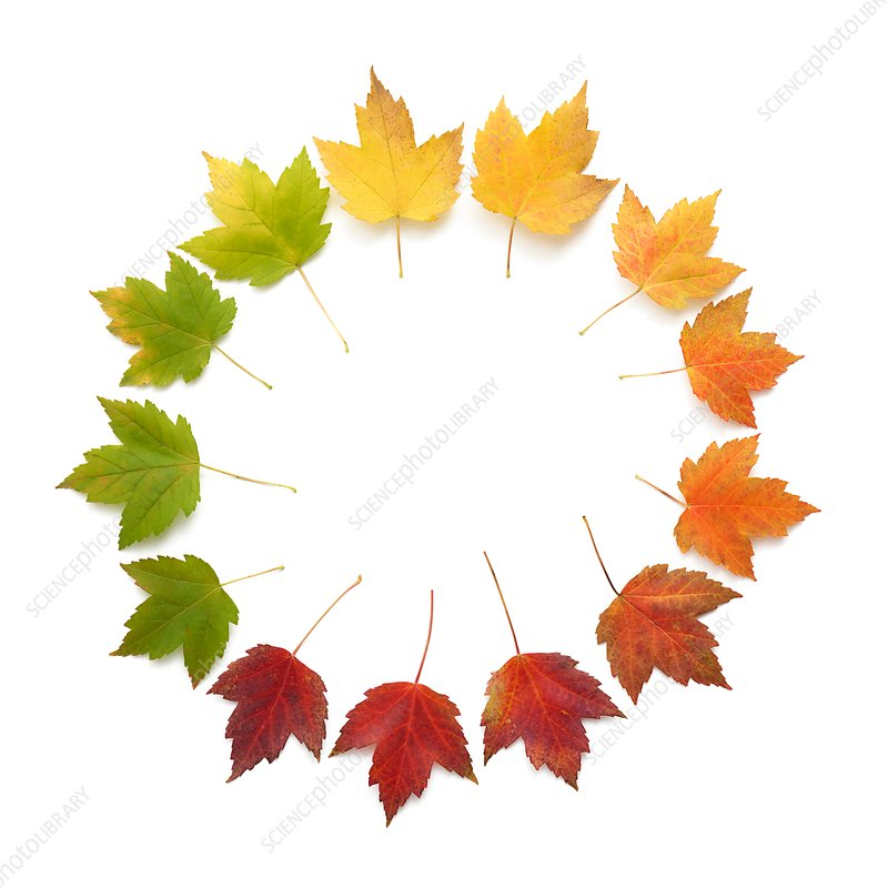 Autumn leaves in a circle