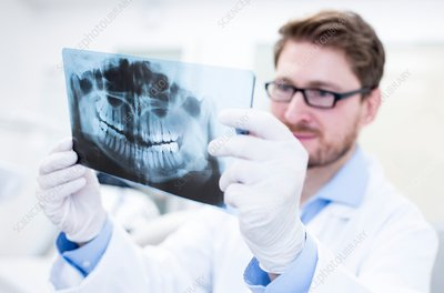Dentist holding x-ray