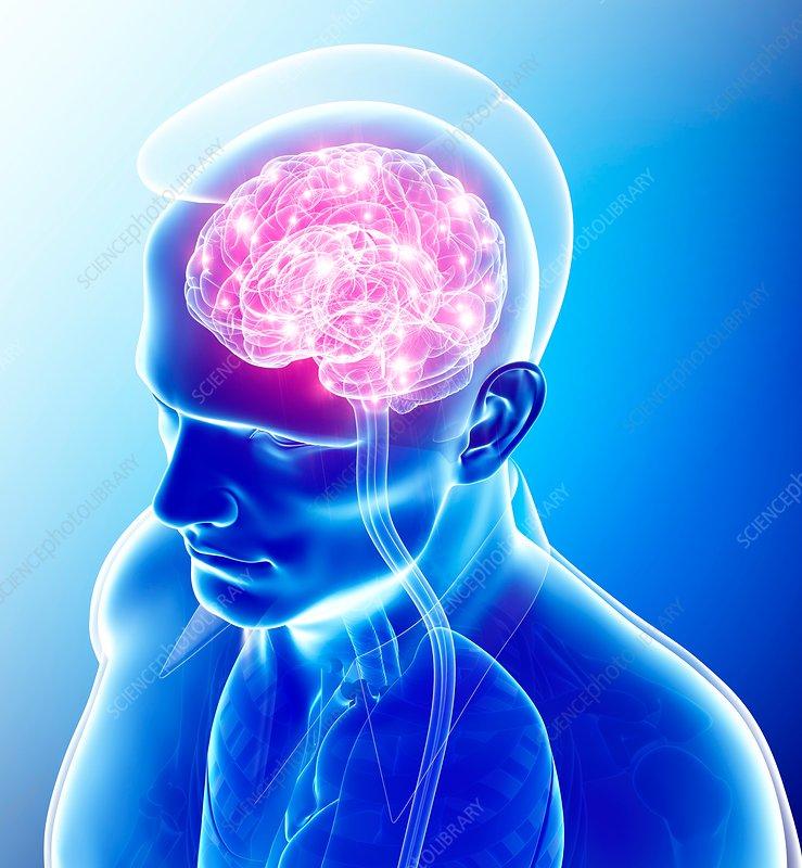Human brain activity, illustration - Stock Image - F015 ...