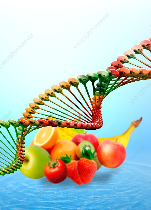 Fresh food and DNA
