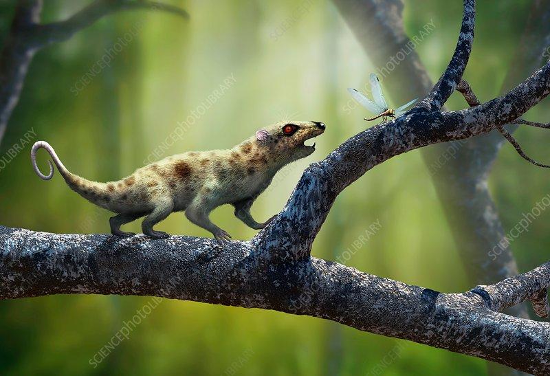 Artwork of Early Mammal Ptilodus