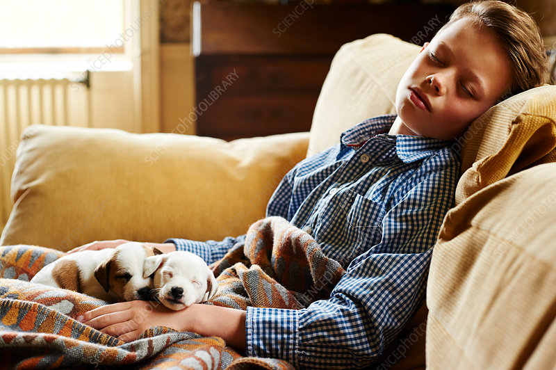 Boy and puppies sleeping on sofa
