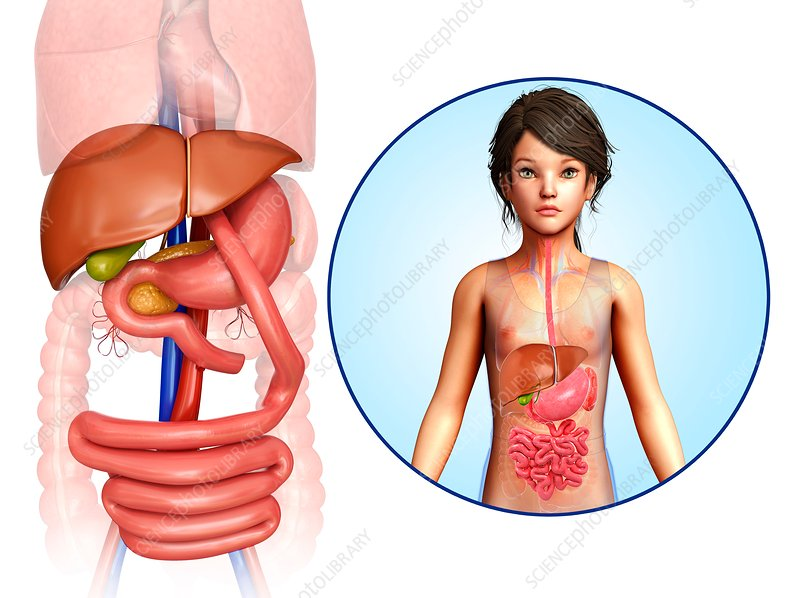 Gastric bypass, illustration