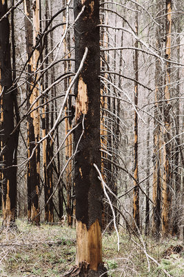 Wenatchee National Forest after fire