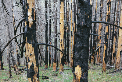 Recovering forest after fire damage