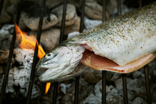 grilled fish on a barbecue