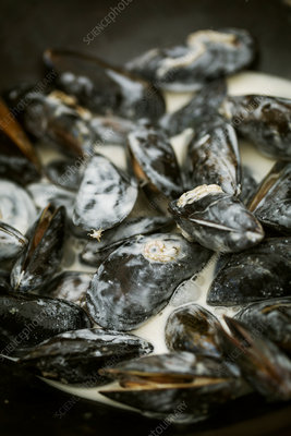 Black Mussels with a cream sauce