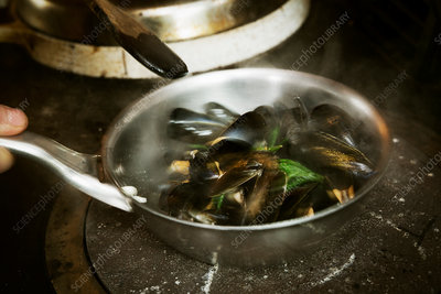 Steamed Black Mussels in a pan