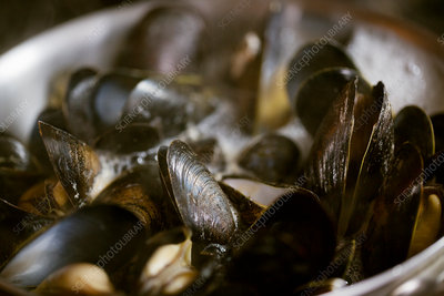 Close up of steamed Black Mussels