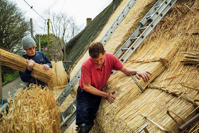 Two men thatching a roof layering straw
