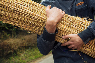 Close up of a thatcher carrying straw
