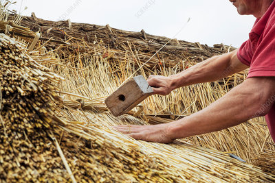 Man thatching a roof