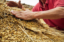 Man thatching a roof, layering the straw