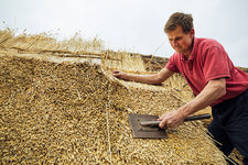 Man dressing the thatch using a leggett