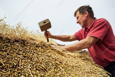 Man thatching a roof with a mallet