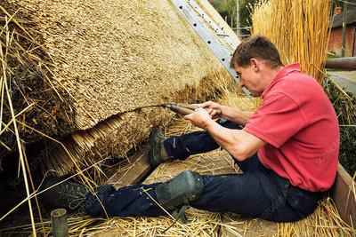 Thatcher trimming thatch with shears