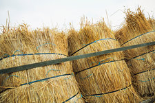Bundles of straw for thatching a roof