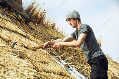 Young man thatching a roof