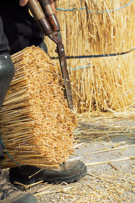 Thatcher cutting a yelm of straw